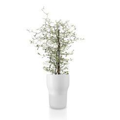 Eva Solo selvvandende urtepotte